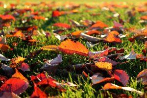 kostenlose Aktivitäten im Herbst